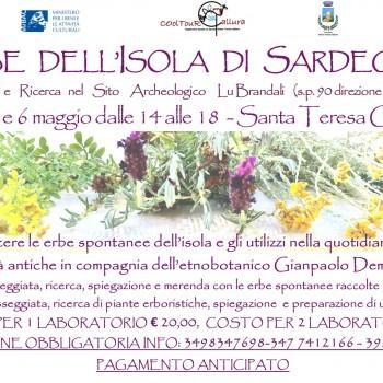 Locandina Erbe spontanee della Sardegna Calarighe